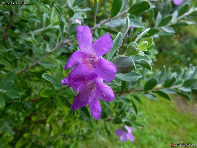 Mon jardin Médocain, quelques vues au fil du temps - Page 2 GBPIX_photo_599165