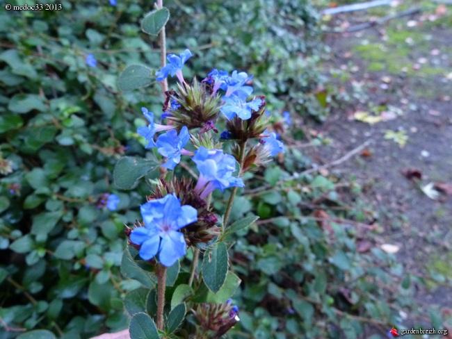 Mon jardin Médocain, quelques vues au fil du temps - Page 2 GBPIX_photo_599171