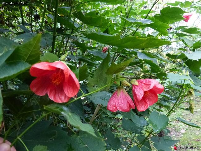 Mon jardin Médocain, quelques vues au fil du temps - Page 2 GBPIX_photo_599172
