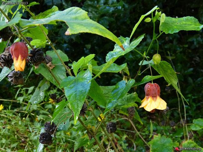 Mon jardin Médocain, quelques vues au fil du temps - Page 2 GBPIX_photo_599313