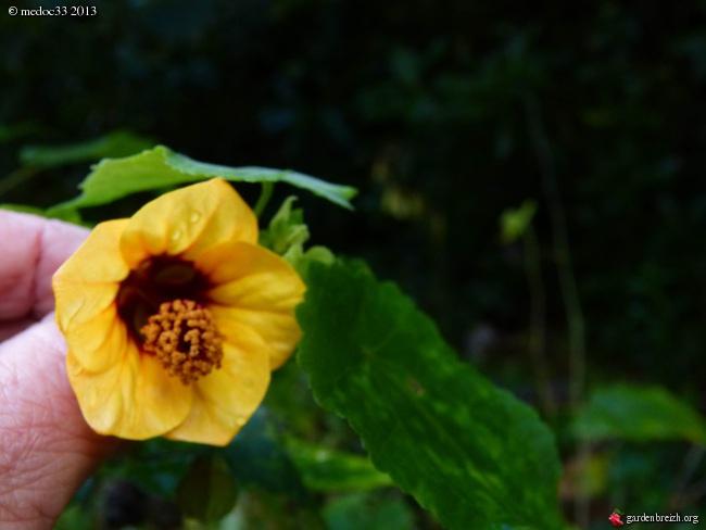 Mon jardin Médocain, quelques vues au fil du temps - Page 2 GBPIX_photo_599314
