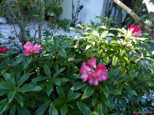 Mon jardin Médocain, quelques vues au fil du temps - Page 2 GBPIX_photo_599319