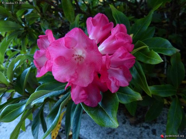 Mon jardin Médocain, quelques vues au fil du temps - Page 2 GBPIX_photo_599320