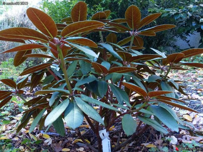 Mon jardin Médocain, quelques vues au fil du temps - Page 2 GBPIX_photo_599321