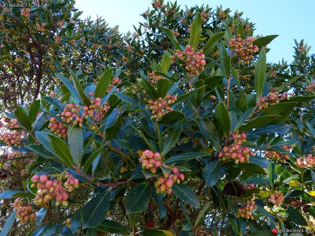 Mon jardin Médocain, quelques vues au fil du temps - Page 2 GBPIX_photo_599440