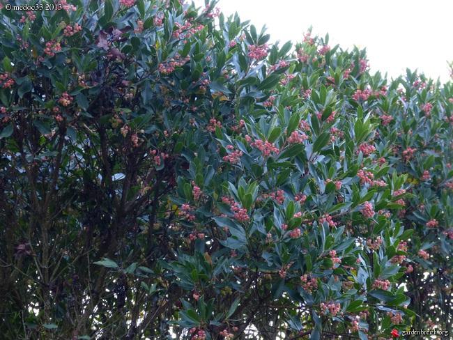 Mon jardin Médocain, quelques vues au fil du temps - Page 2 GBPIX_photo_600013