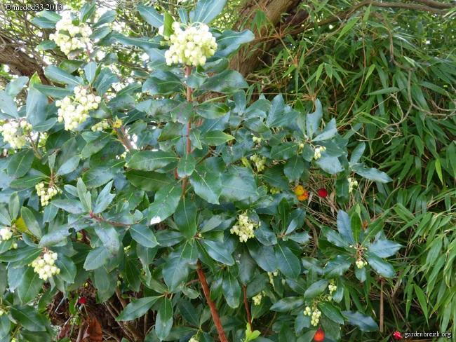 Mon jardin Médocain, quelques vues au fil du temps - Page 2 GBPIX_photo_600021