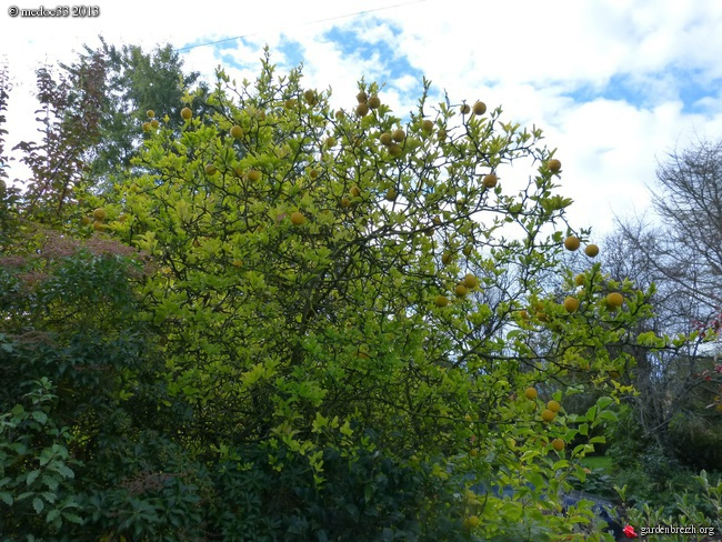 Mon jardin Médocain, quelques vues au fil du temps - Page 2 GBPIX_photo_600027