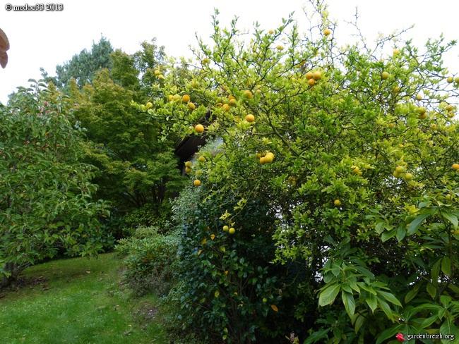 Mon jardin Médocain, quelques vues au fil du temps - Page 2 GBPIX_photo_600028