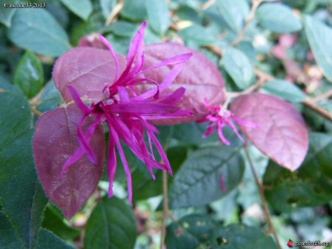 Mon jardin Médocain, quelques vues au fil du temps - Page 2 GBPIX_photo_600031