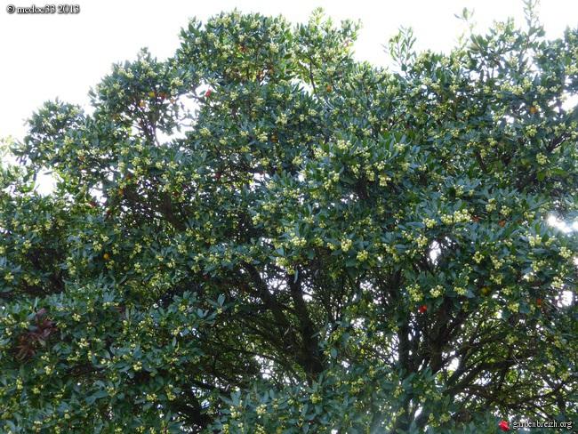 Mon jardin Médocain, quelques vues au fil du temps - Page 2 GBPIX_photo_600037