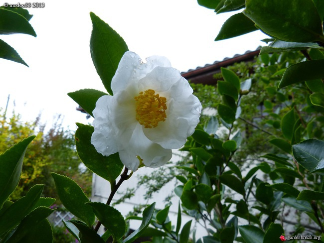 Les Camellias saison 2013-2014 GBPIX_photo_600466