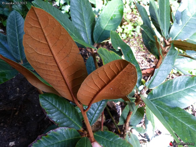 Mon jardin Médocain, quelques vues au fil du temps - Page 3 GBPIX_photo_600575