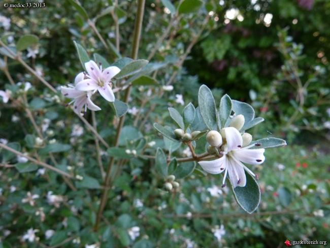 Mon jardin Médocain, quelques vues au fil du temps - Page 3 GBPIX_photo_600877