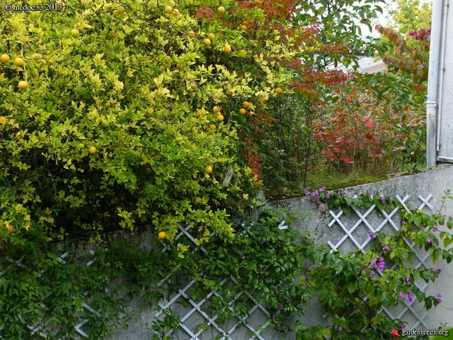 Mon jardin Médocain, quelques vues au fil du temps - Page 3 GBPIX_photo_600890