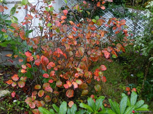 Mon jardin Médocain, quelques vues au fil du temps - Page 3 GBPIX_photo_600897