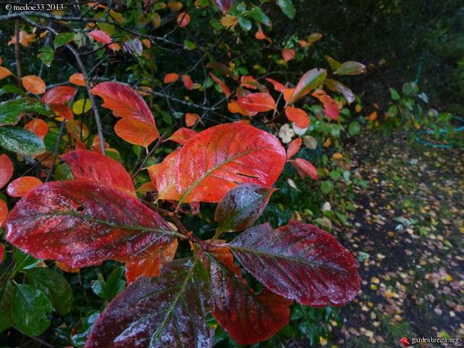 Mon jardin Médocain, quelques vues au fil du temps - Page 3 GBPIX_photo_600898