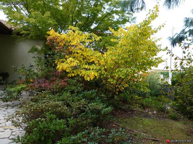 Mon jardin Médocain, quelques vues au fil du temps - Page 3 GBPIX_photo_600966