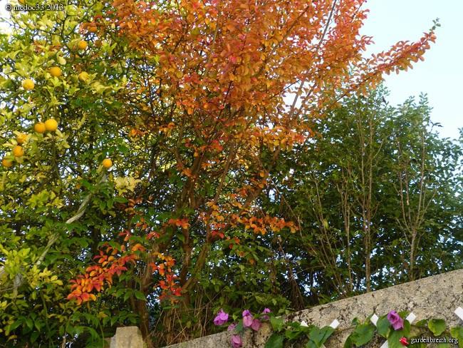 Mon jardin Médocain, quelques vues au fil du temps - Page 3 GBPIX_photo_600969
