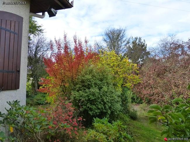 Mon jardin Médocain, quelques vues au fil du temps - Page 3 GBPIX_photo_600973