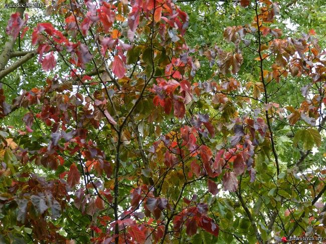 Mon jardin Médocain, quelques vues au fil du temps - Page 3 GBPIX_photo_600976