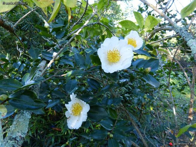 Mon jardin Médocain, quelques vues au fil du temps - Page 3 GBPIX_photo_601008