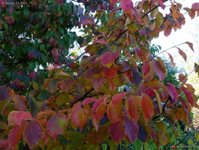 Mon jardin Médocain, quelques vues au fil du temps - Page 3 GBPIX_photo_601009