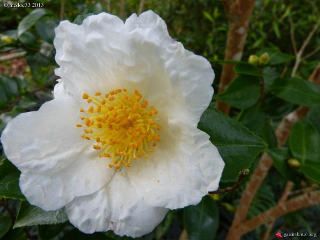 Mon jardin Médocain, quelques vues au fil du temps - Page 3 GBPIX_photo_601010