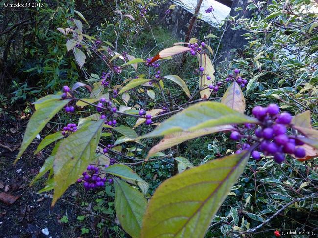 Mon jardin Médocain, quelques vues au fil du temps - Page 3 GBPIX_photo_601015