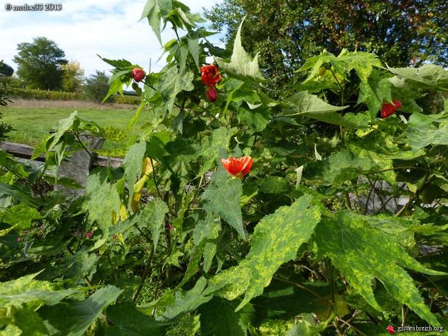 Mon jardin Médocain, quelques vues au fil du temps - Page 3 GBPIX_photo_601018