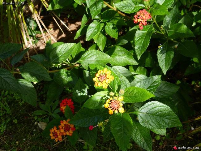 Mon jardin Médocain, quelques vues au fil du temps - Page 3 GBPIX_photo_601020