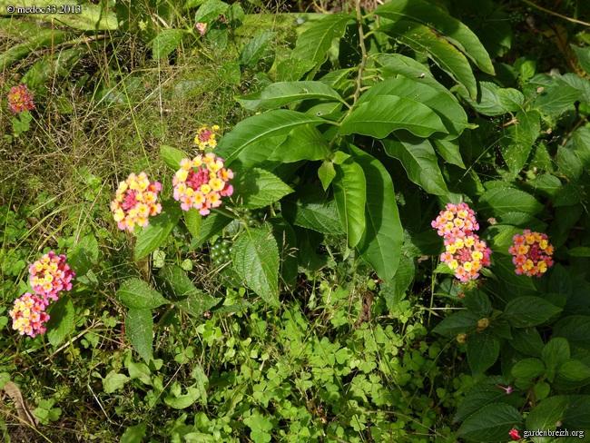 Mon jardin Médocain, quelques vues au fil du temps - Page 3 GBPIX_photo_601021