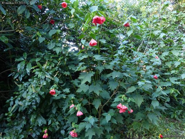 Mon jardin Médocain, quelques vues au fil du temps - Page 3 GBPIX_photo_601023