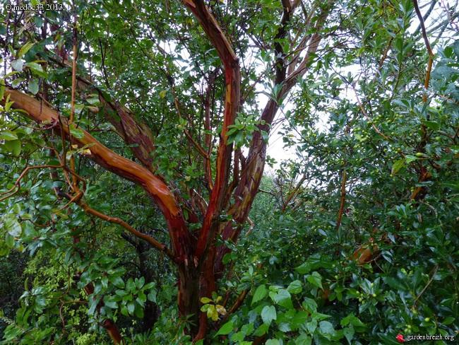 Mon jardin Médocain, quelques vues au fil du temps - Page 3 GBPIX_photo_601029