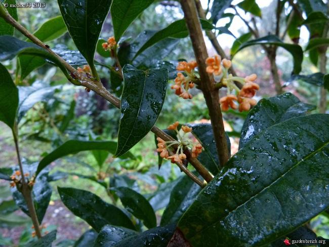 Mon jardin Médocain, quelques vues au fil du temps - Page 3 GBPIX_photo_601030