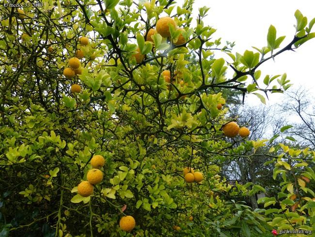 Mon jardin Médocain, quelques vues au fil du temps - Page 3 GBPIX_photo_601034