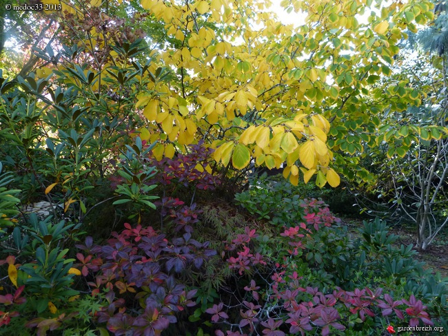 Mon jardin Médocain, quelques vues au fil du temps - Page 3 GBPIX_photo_601037