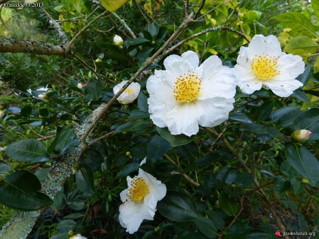 Mon jardin Médocain, quelques vues au fil du temps - Page 3 GBPIX_photo_601201