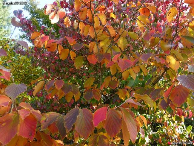 Mon jardin Médocain, quelques vues au fil du temps - Page 3 GBPIX_photo_601203
