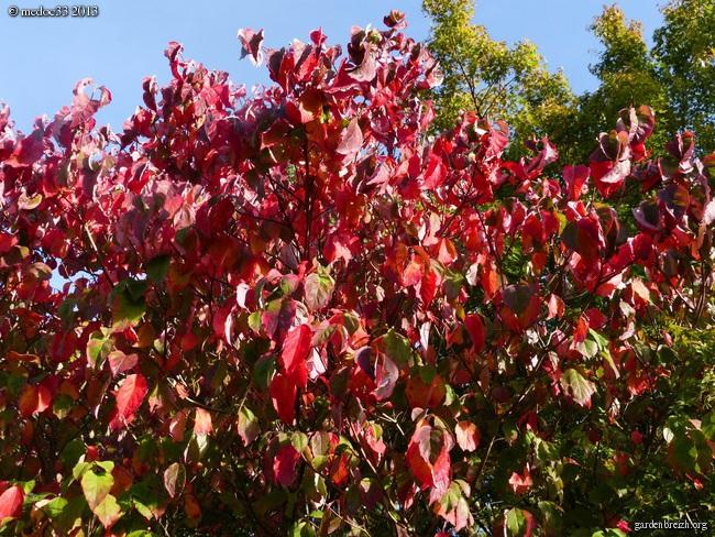 Mon jardin Médocain, quelques vues au fil du temps - Page 3 GBPIX_photo_601204