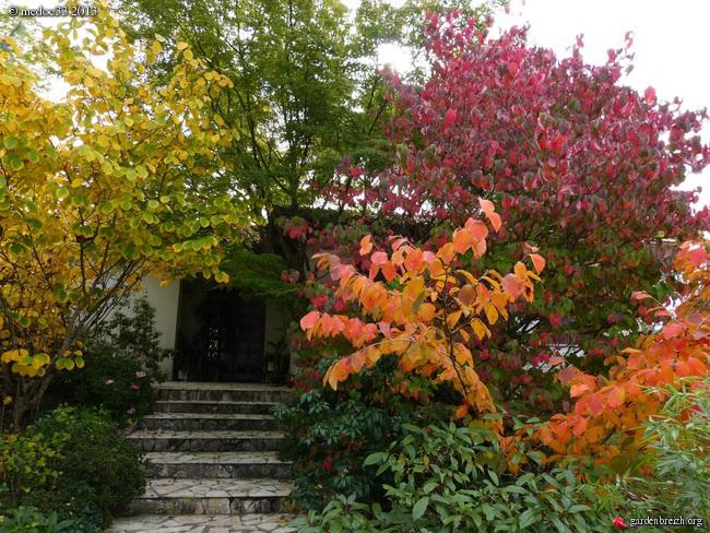 Mon jardin Médocain, quelques vues au fil du temps - Page 3 GBPIX_photo_601208