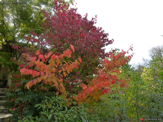 Mon jardin Médocain, quelques vues au fil du temps - Page 3 GBPIX_photo_601209