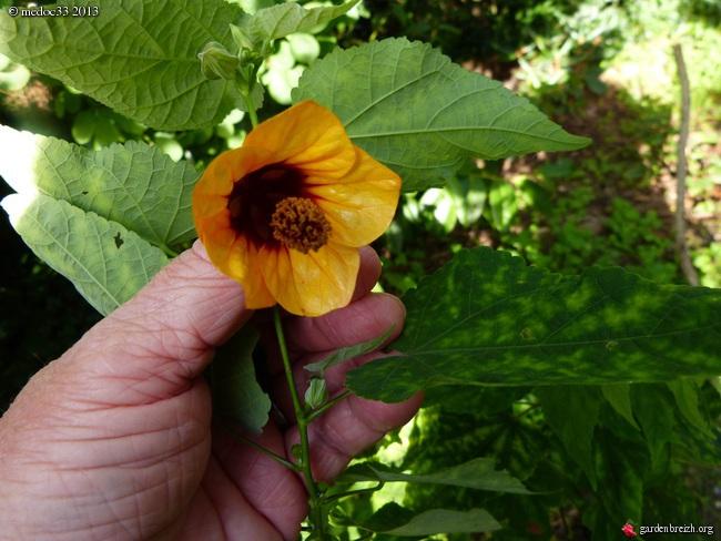 Mon jardin Médocain, quelques vues au fil du temps - Page 3 GBPIX_photo_601237