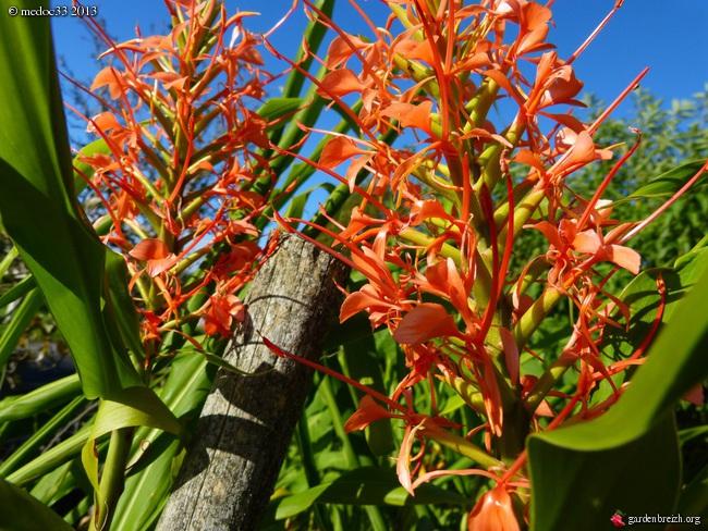 Mon jardin Médocain, quelques vues au fil du temps - Page 3 GBPIX_photo_601240