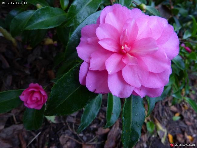 Mon jardin Médocain, quelques vues au fil du temps - Page 3 GBPIX_photo_601903