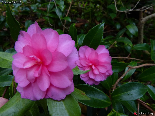 Mon jardin Médocain, quelques vues au fil du temps - Page 3 GBPIX_photo_601905