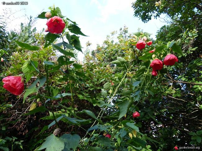 Mon jardin Médocain, quelques vues au fil du temps - Page 3 GBPIX_photo_602128