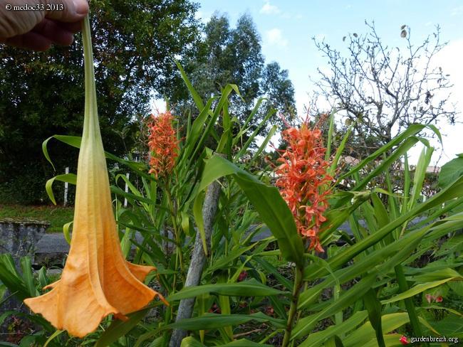 Mon jardin Médocain, quelques vues au fil du temps - Page 3 GBPIX_photo_602136