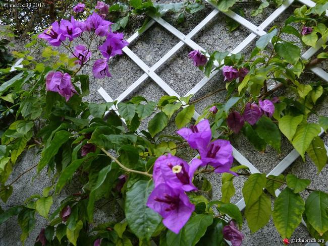 Mon jardin Médocain, quelques vues au fil du temps - Page 3 GBPIX_photo_602164
