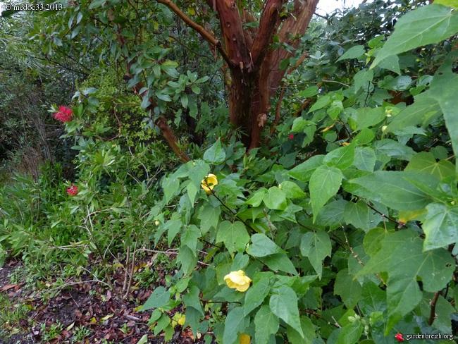 Mon jardin Médocain, quelques vues au fil du temps - Page 3 GBPIX_photo_602846
